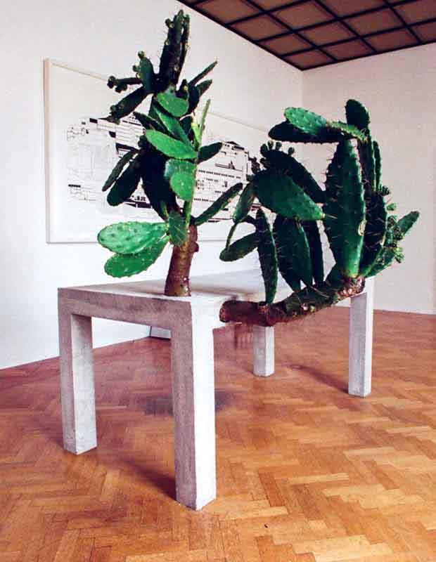 tavolo di cemento con pianta